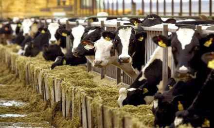 Ερώτηση Δ.Κωνσταντόπουλου σχετικά με τον εμβολιασμό των βοοειδών κατά της οζώδους δερματίτιδας