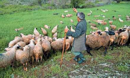 Δωρεάν προγράμμα μελιταίου πυρετού των αιγοπροβάτων για κτηνοτρόφους