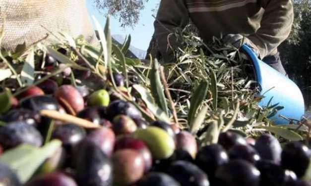 ΠΑΣΟΚ:Κυβερνητικές παλινωδίες  στις πλάτες του αγροτικού – επιχειρηµατικού κόσµου της Αιτωλοακαρνανίας