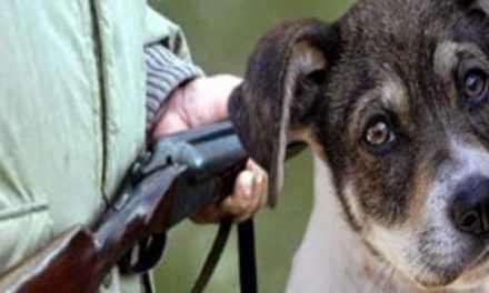 Αγρίνιο: Πυροβόλησε σκύλο  και εξαφανίστηκε!
