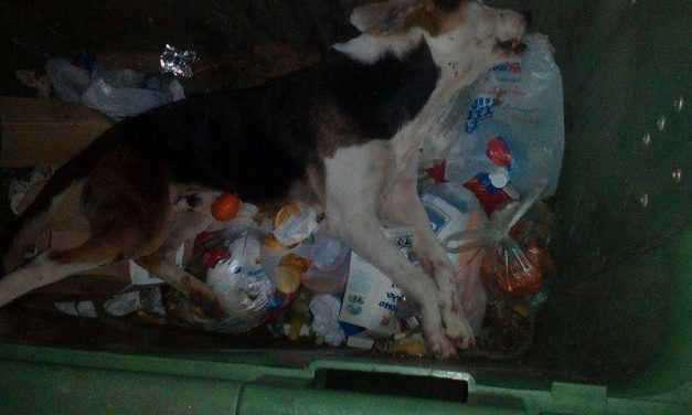 Νέα Αβόρανη: Φόλες σε σκύλους …