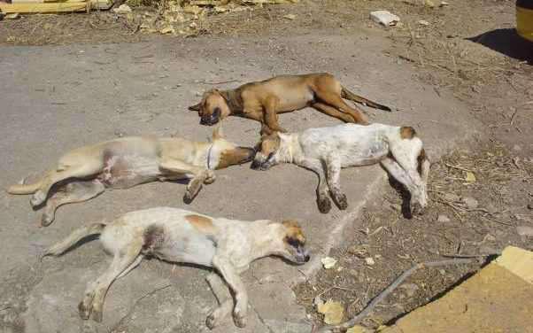 Αγρίνιο: Αναστάτωση  από τα συνεχόμενα κρούσματα θανάτωσης σκύλων το τελευταίο διάστημα.