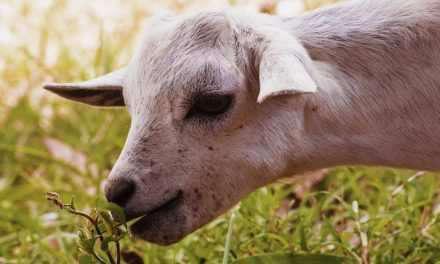 Οδηγίες για τη σωστή διατροφή των ζώων