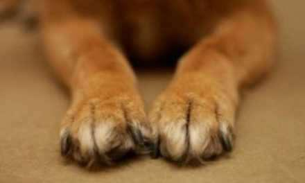 Αναβρύτη Ναυπακτίας:Παρέμβαση της αστυνομίας για θανάτωση σκύλου.