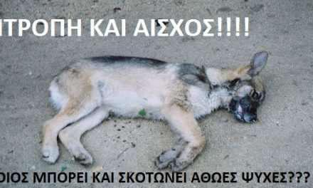 Αγρίνιο: Μηνύσεις για τα σκυλιά που έπεσαν θύματα δηλητηριασμού!
