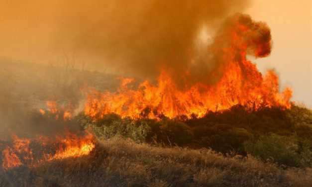 Αγρίνιο: Φωτιά κατέκαψε 5 στρ. δασικής έκτασης στην Παλιοκαρυά