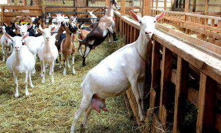Αναγκαία η άδεια σε βιολογική  Κτηνοτροφία και Σπάνιες Φυλές.