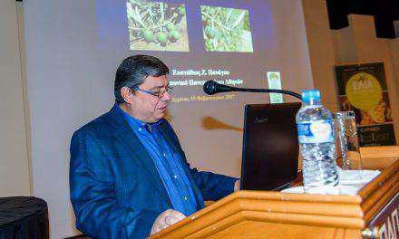 Οργανοληπτική αξιολόγηση της ελιάς