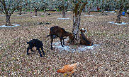Οικόσιτα ζώα: Τι προβλέπει ο κανονισμός